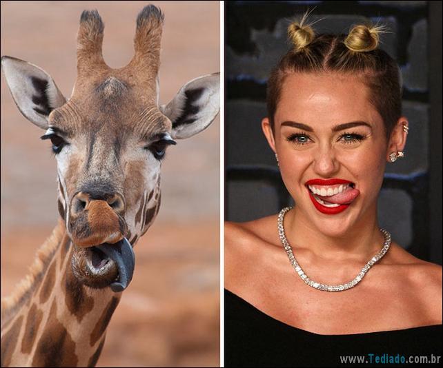animais-que-e-semelhantes-com-celebridades-23