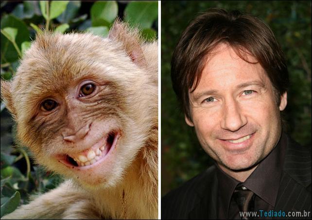 animais-que-e-semelhantes-com-celebridades-25
