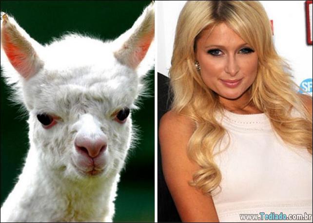 animais-que-e-semelhantes-com-celebridades-33
