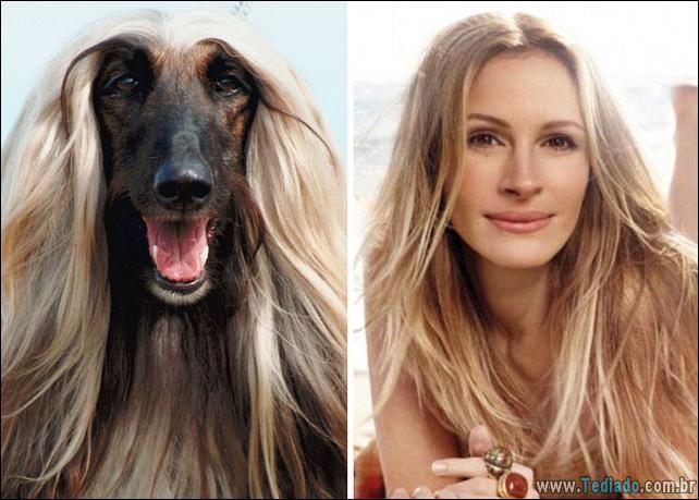 animais-que-e-semelhantes-com-celebridades-34