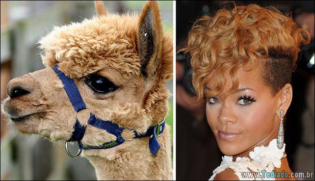 animais-que-e-semelhantes-com-celebridades-36
