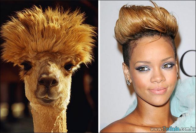animais-que-e-semelhantes-com-celebridades-37
