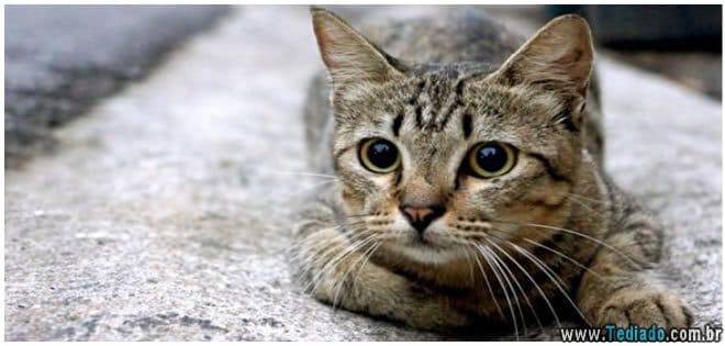 gato-em-casa-faz-bem-a-saude-02