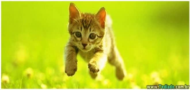 gato-em-casa-faz-bem-a-saude-04