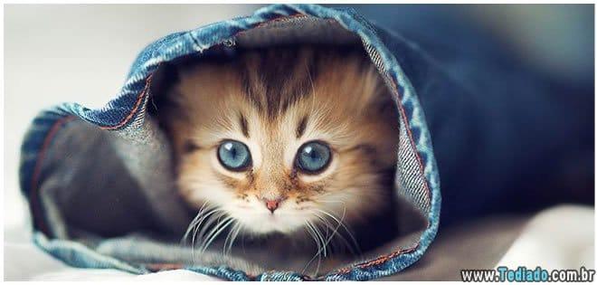 7 estudos científicos que comprovam que ter um gato faz bem para sua saúde 15