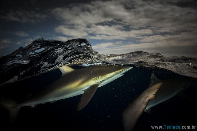 impressionantes-fotos-tiradas-entre-dois-mundo-18