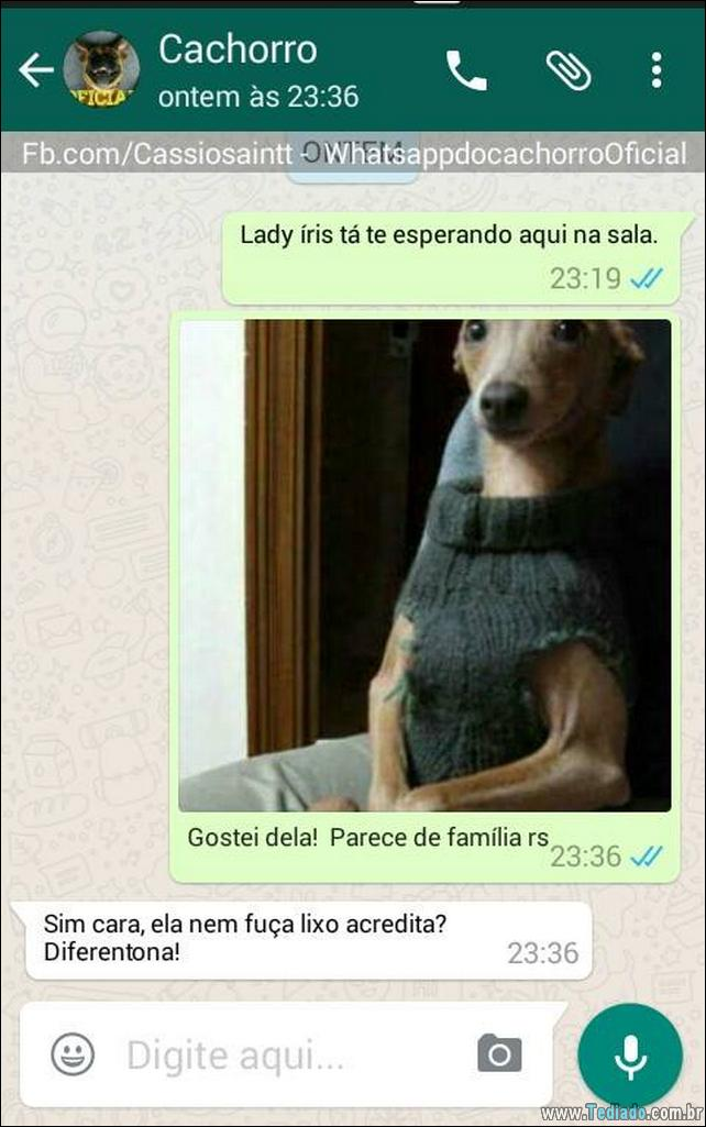conversar-com-cachorro-02