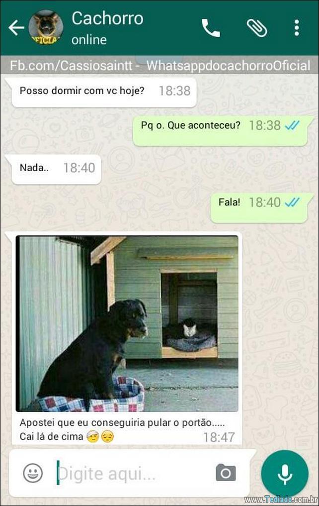 conversar-com-cachorro-12