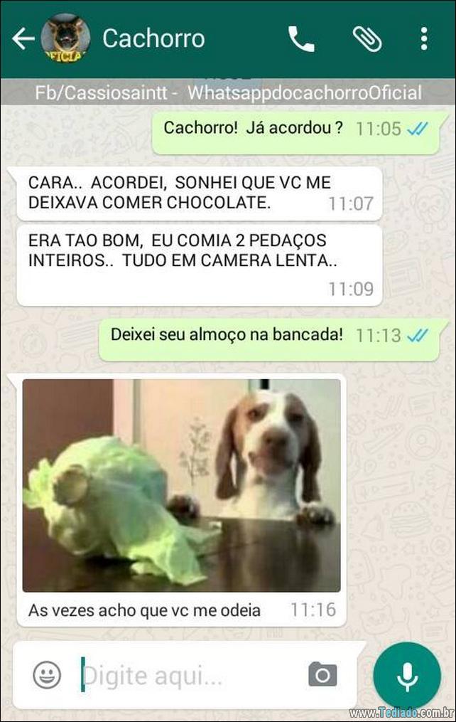 conversar-com-cachorro-23