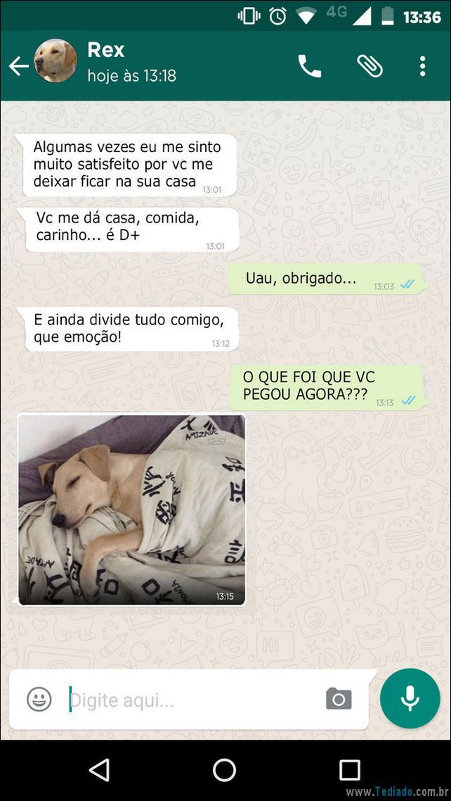 conversar-whatsapp-cachorro-02