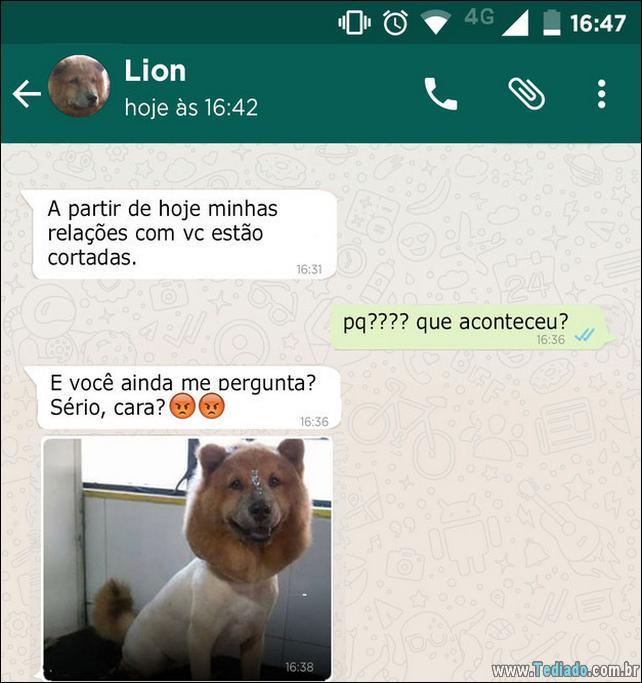 conversar-whatsapp-cachorro-03