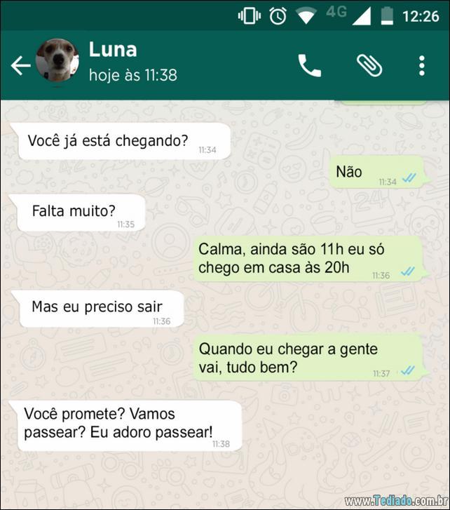 conversar-whatsapp-cachorro-06