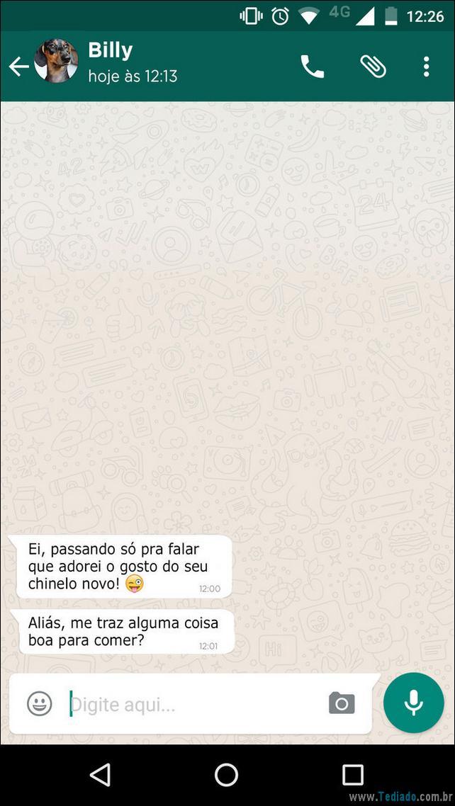 cachorro no WhatsApp