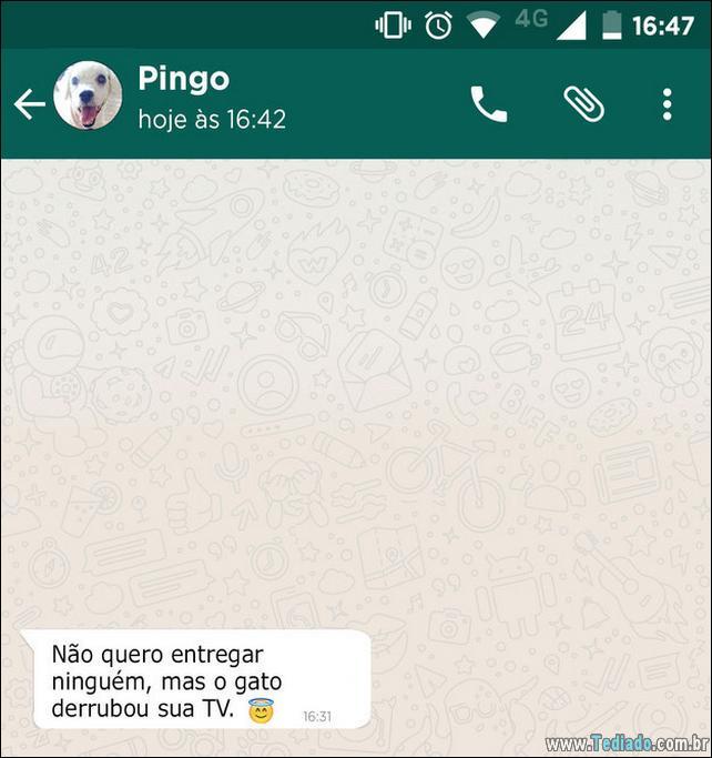 conversar-whatsapp-cachorro-10