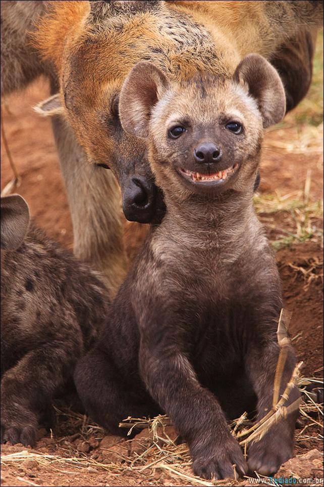 animais-sorrindo-03