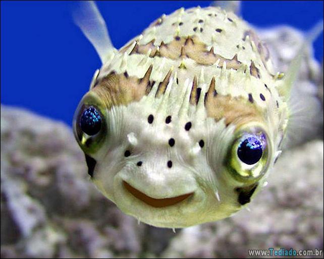 animais-sorrindo-06