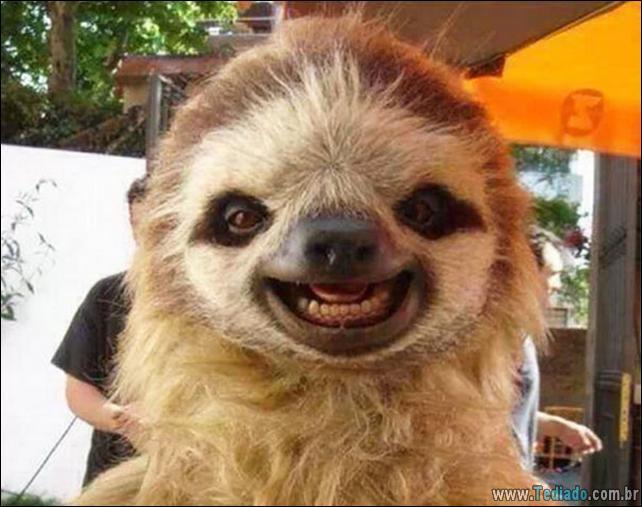 animais-sorrindo-08