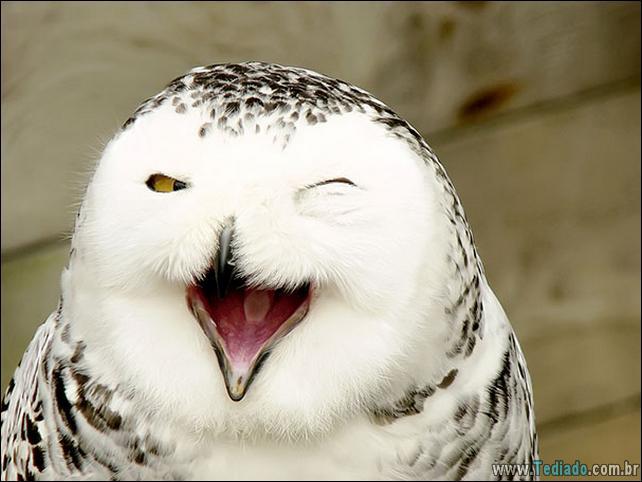 animais-sorrindo-10