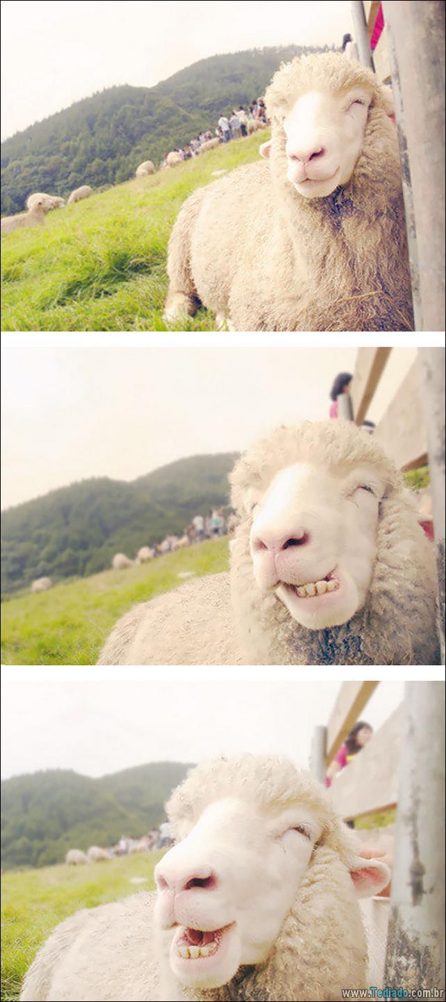 animais-sorrindo-20