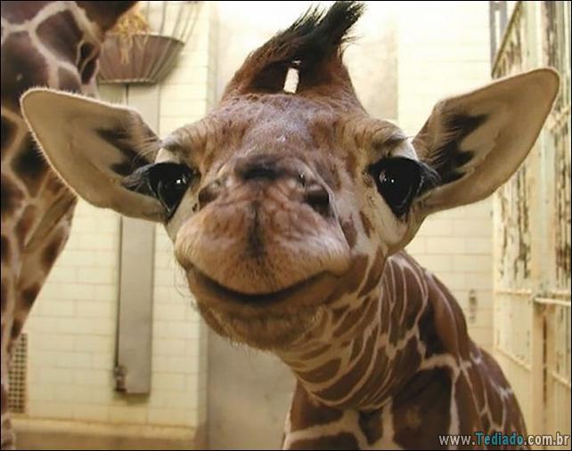 animais-sorrindo-23