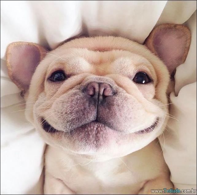 animais-sorrindo-31