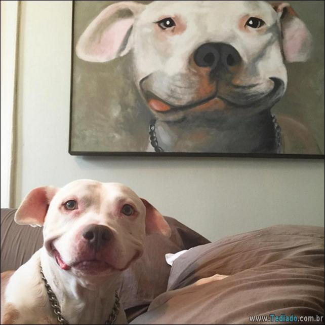 animais-sorrindo-43
