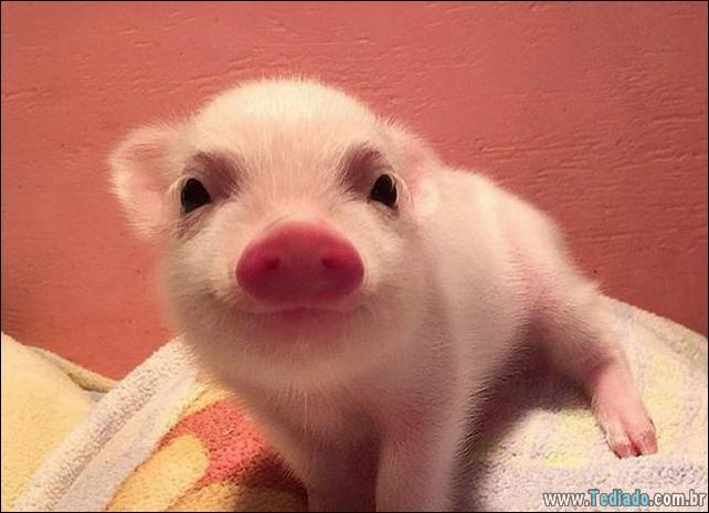 animais-sorrindo-50