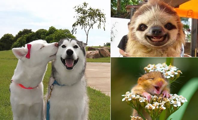 50 Animais sorrindo, que irá fazer você sorrir 5