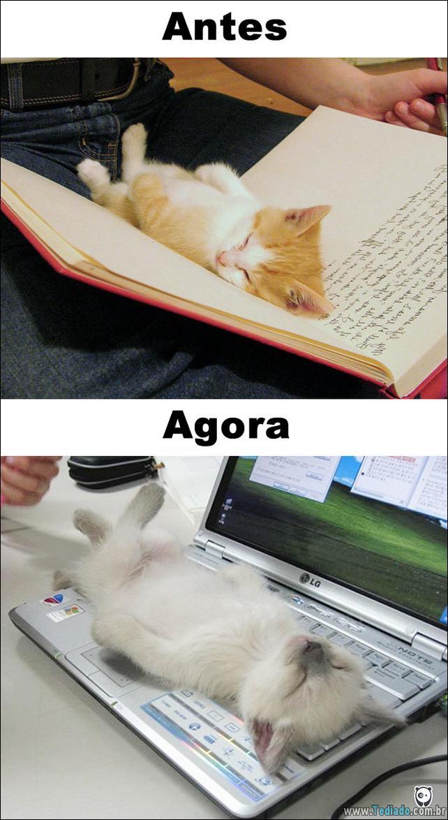 antes-e-agora-como-tecnologia-mudou-a-vida-gatos-03