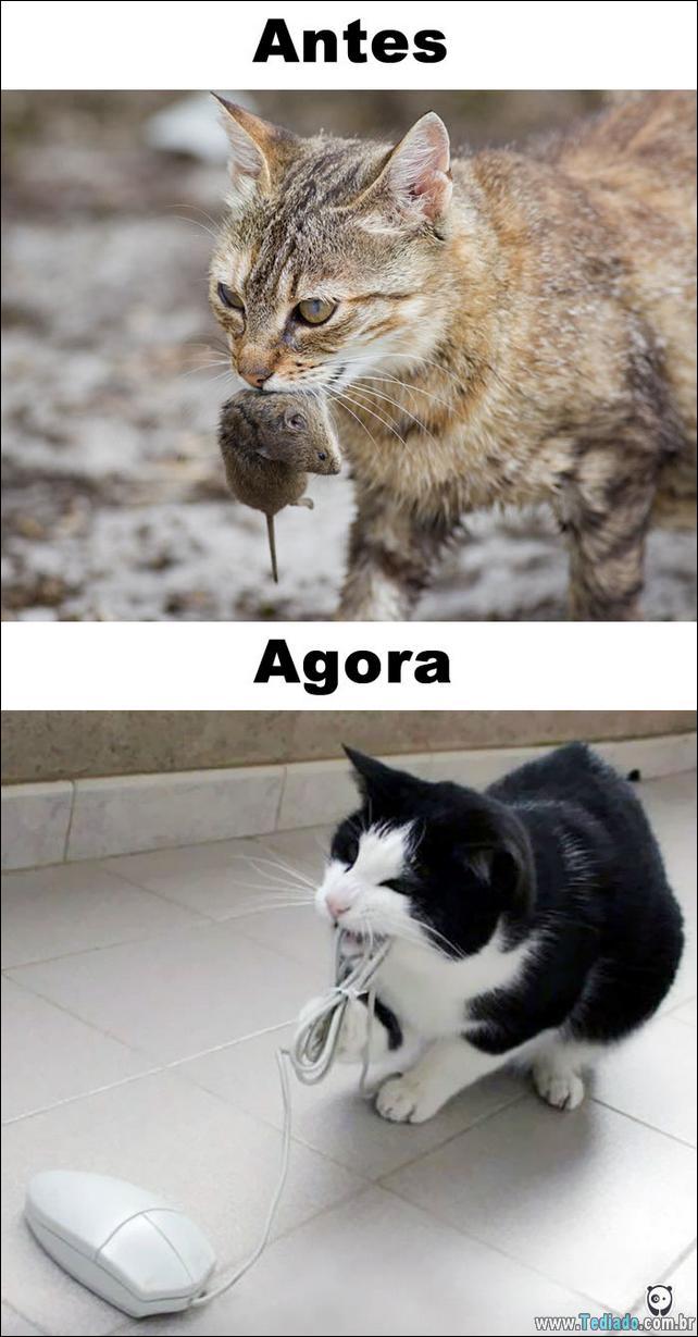 antes-e-agora-como-tecnologia-mudou-a-vida-gatos-04