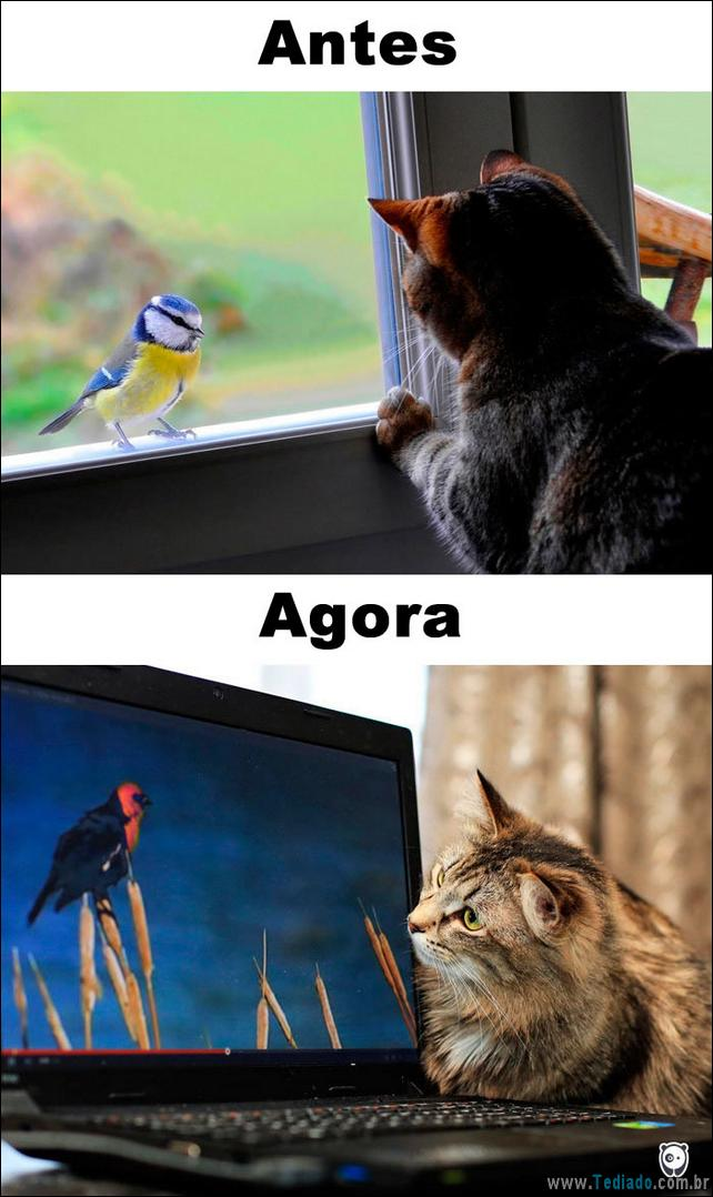 antes-e-agora-como-tecnologia-mudou-a-vida-gatos-05