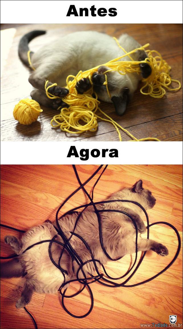antes-e-agora-como-tecnologia-mudou-a-vida-gatos-06
