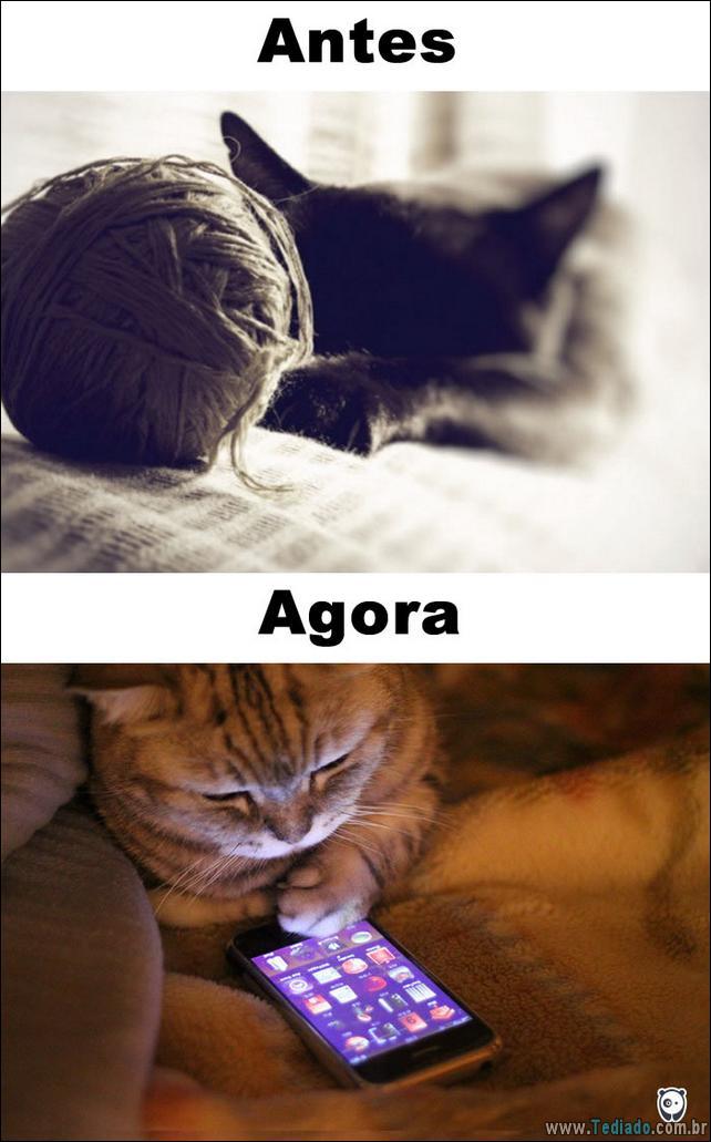 antes-e-agora-como-tecnologia-mudou-a-vida-gatos-07