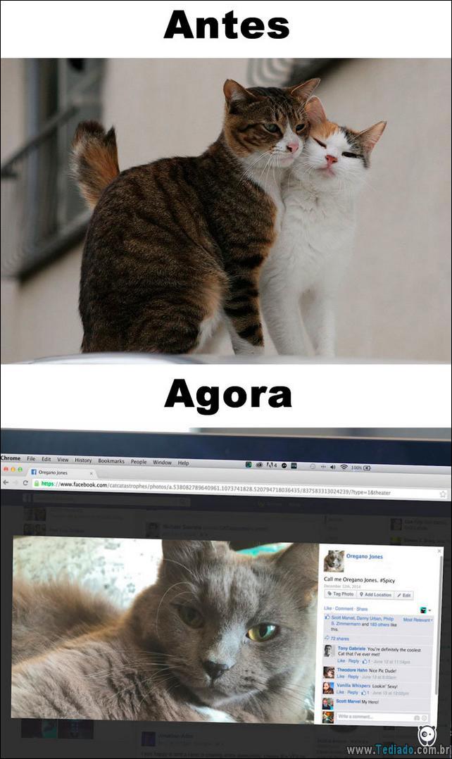 antes-e-agora-como-tecnologia-mudou-a-vida-gatos-09