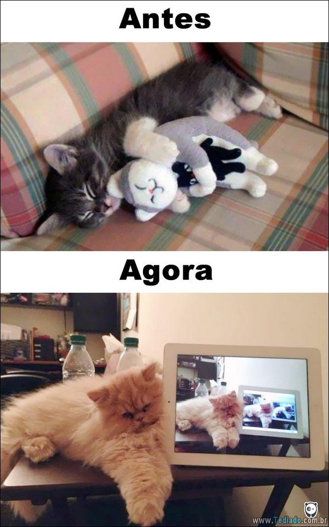 antes-e-agora-como-tecnologia-mudou-a-vida-gatos-10