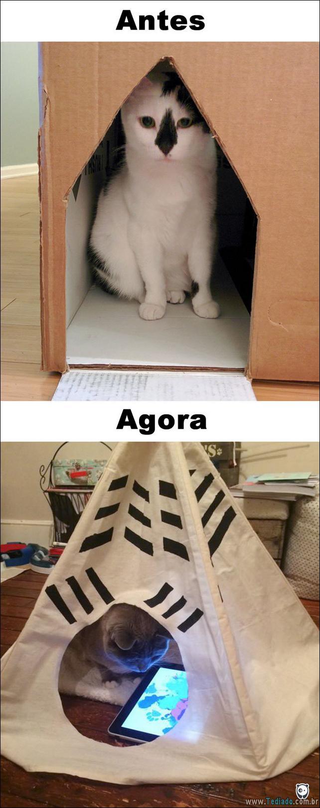 antes-e-agora-como-tecnologia-mudou-a-vida-gatos-11
