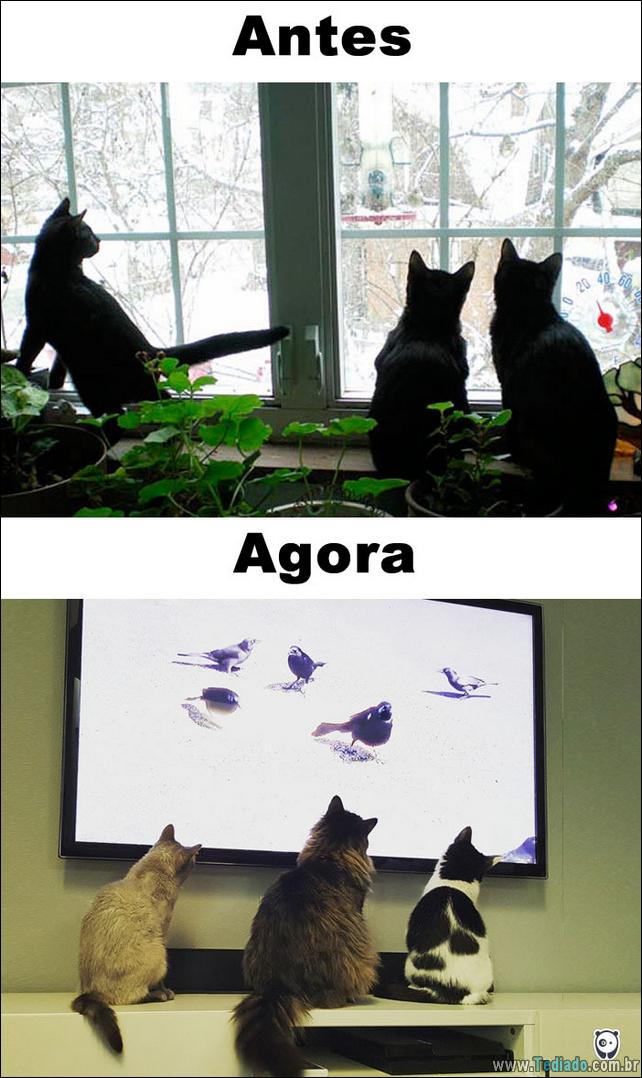 antes-e-agora-como-tecnologia-mudou-a-vida-gatos-13