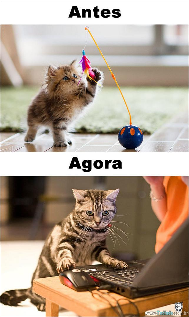 antes-e-agora-como-tecnologia-mudou-a-vida-gatos-15