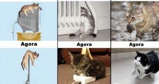 antes-e-depois-tecnologia-gato