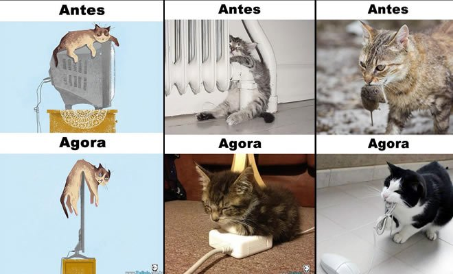 Photo of Antes Vs Agora: Como a tecnologia mudou a vida dos gatos (15 fotos)