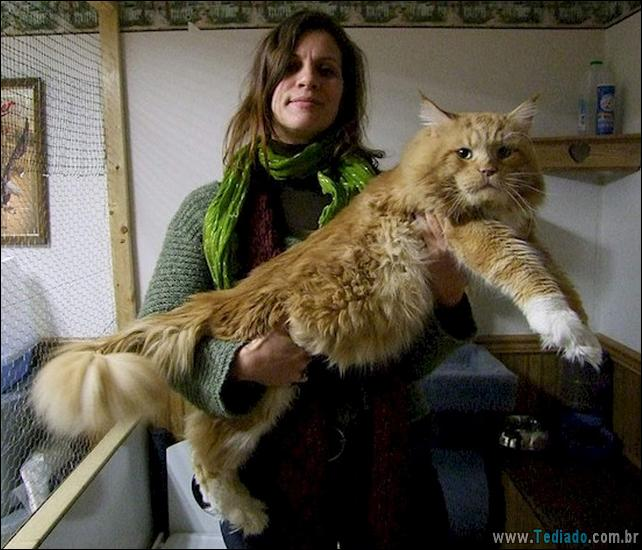 gatos-grandes-02