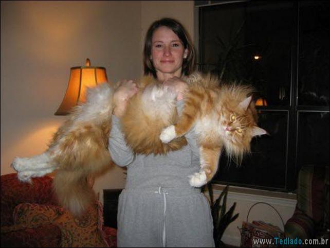 gatos-grandes-04