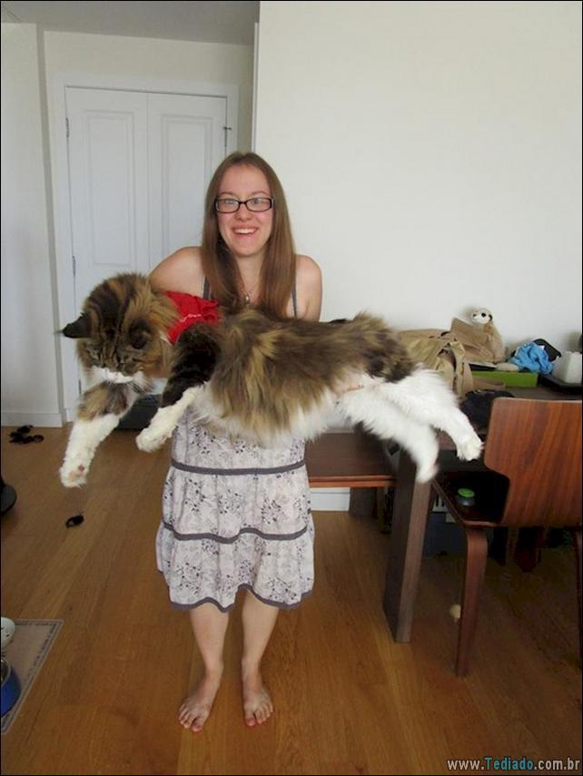 gatos-grandes-09