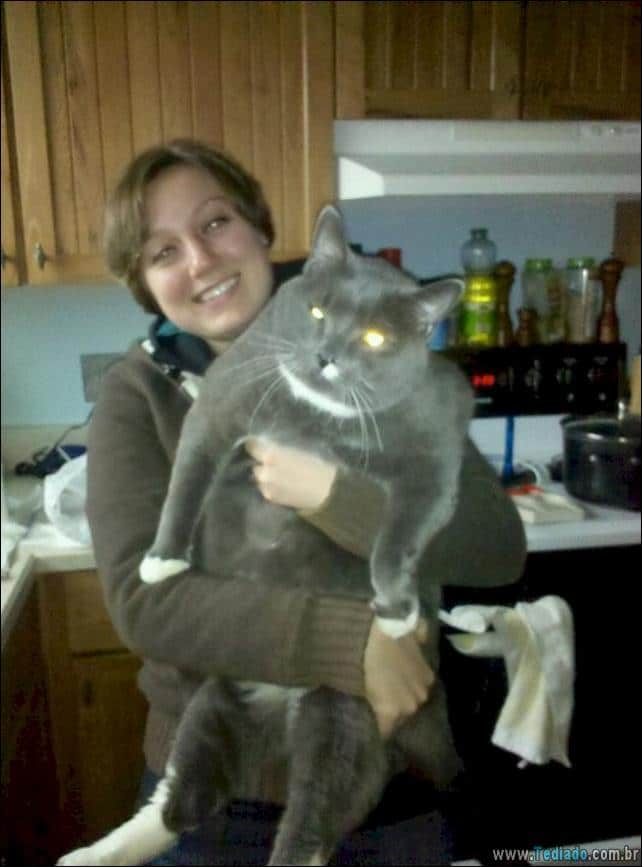 gatos-grandes-10