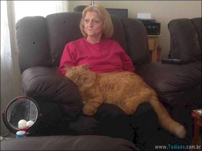 gatos-grandes-11