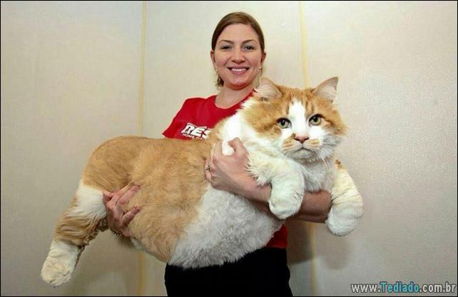 gatos-grandes-15