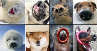 focas-cachorros