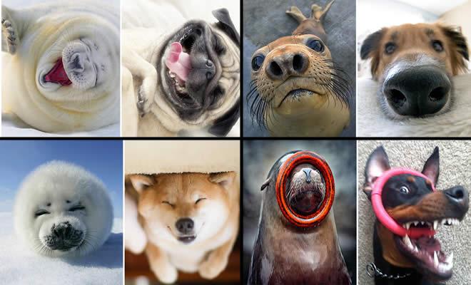 Focas são realmente cachorros do oceano (40 fotos) 2
