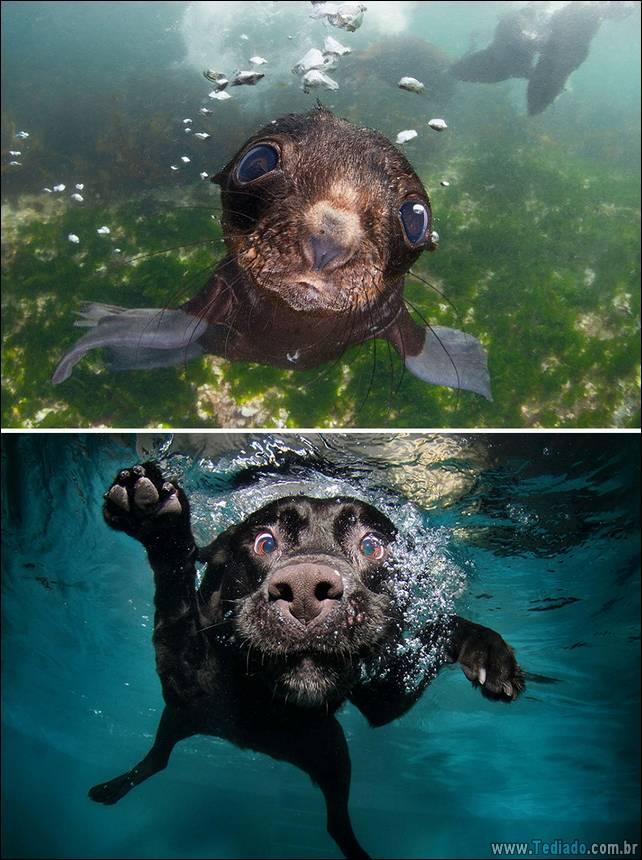 focas-sao-cachorros-oceanos-04