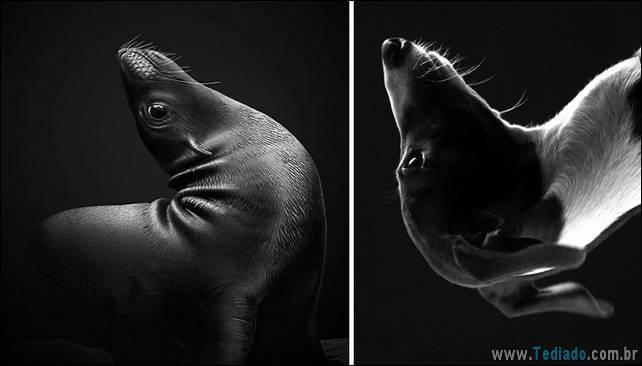 focas-sao-cachorros-oceanos-05